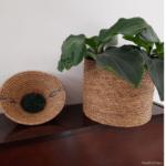 panière ronde et plante dans une boite ronde en fibre naturelle